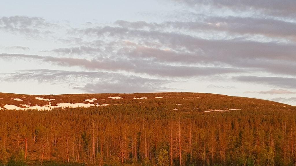 Vy över fjällvärlden, låga fjäll och skogar i lågt lite rödtonat solljus.