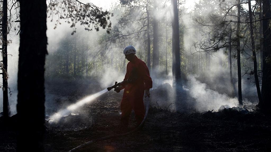 En skogsbrand i Umeå.