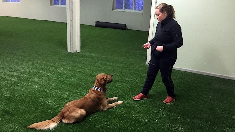 Hunden Astro och Emelie Jansson tränar i den nya hundarenan.