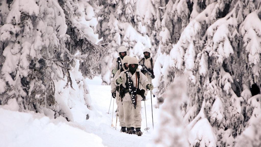 Soldater som går Basic winter warfare course i Arvidsjaur.