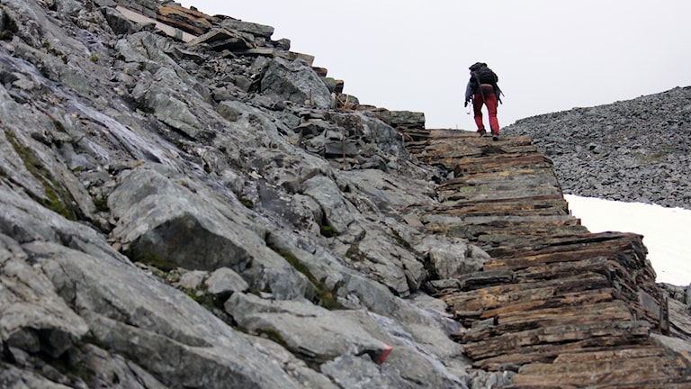 Fjällvandring till Kebnekaises sydtopp: Stentrappor som sherpas har byggt.