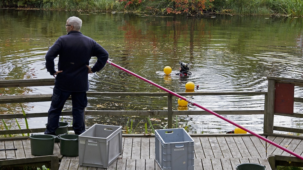 Polisens dykare i Dal-Brittas damm i Sandviken.
