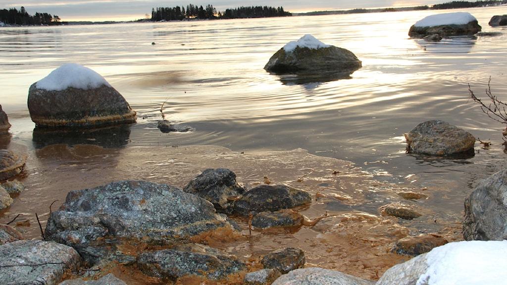 Efter utsläppet 2011 kantades stränderna av tjock råtallolja. Nu är den mesta oljan borta, men problemen är fortfarande så stora att kommunen kommer fortsätta saneringsarbetet. Foto: Christian Höijer / Sveriges Radio