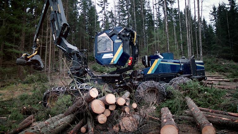 Skogsbranschen vill komma till rätta med avverkningsskador. Foto: Scanpix