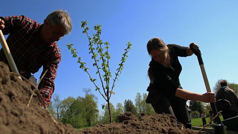 Wij trädgårdar får sex miljoner från kommunen.