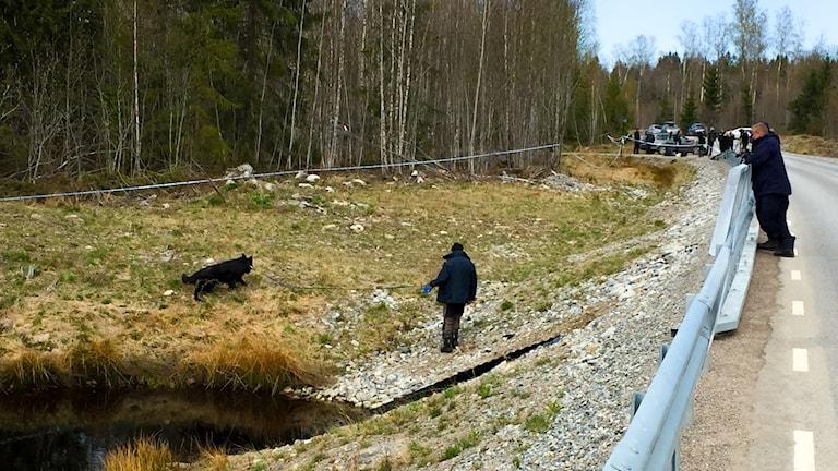 En hundförare söker med en schäferhund på sedan av en väg-- Längre bort syns blåvita avspärrningsband, en bil och en samling personer.
