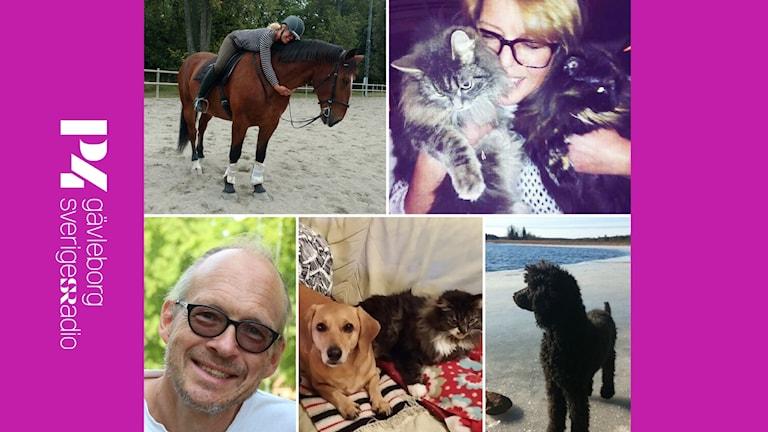 Collage med Larrys och Maria Sundells djur.