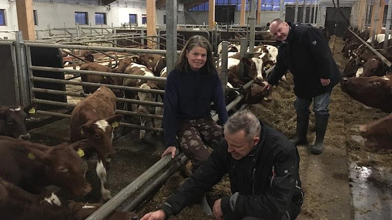 Lennart och Irene Valleräng och Magnus Lindberg gefleortens mejeri mjölkpris