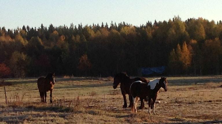 Den här idylliska utsikten har Kerstin och Madeleine den här morgonen. Foto: Kerstin Carlsson / Sveriges Radio