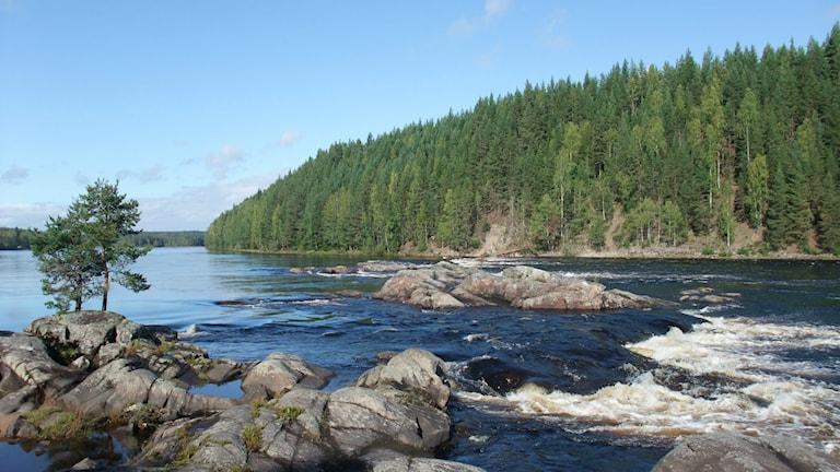 Mellanljusnan i Ljusdals kommun föreslås bli naturreservat. Foto: länsstyrelsen