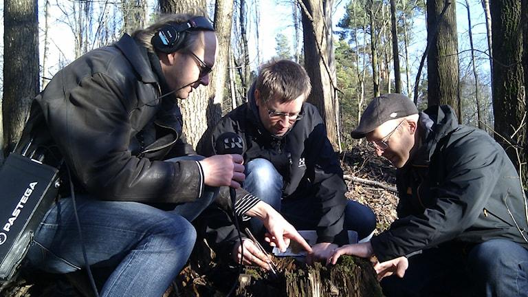 Larry Forsberg, insektsvetaren Magnus Stenmark och biologen Daniel Segerlind har hittat en spindel i skogen. Foto: Joacim Lindwall/SR