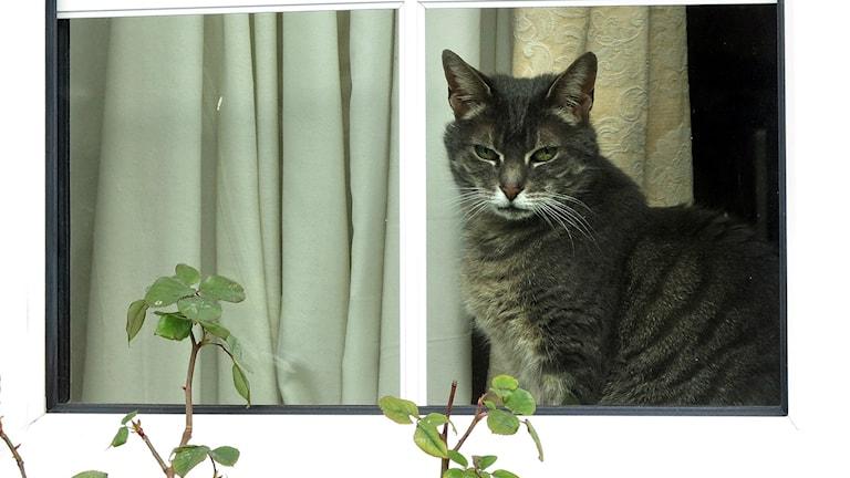 En djurägare flyttade, men tog inte med sig katten. Foto: TT/Sveriges Radio