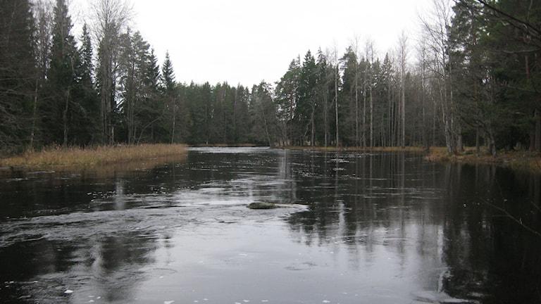 Reglerna i Färnebofjärdens nationalpark ändras från och med 1 januari 2015. Foto: Maria Zander/Sveriges Radio
