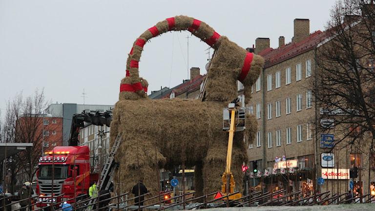 Julbocken står på Slottstorget i Gävle. Foto: Maria Zander/Sveriges Radio