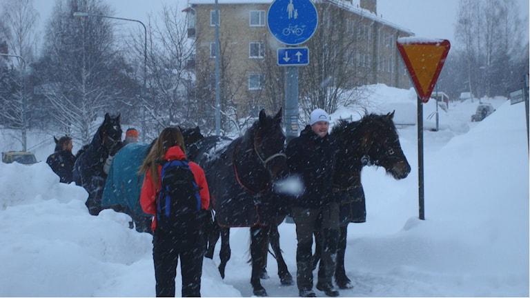 Hästarna fångades till slut in av ägaren. Foto: Polisen