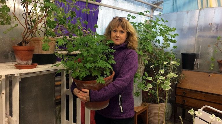 Carola Arnaryd på Hedvigs trädgård med en pelargon i famnen. Foto: Madeleine Drake/Sveriges Radio