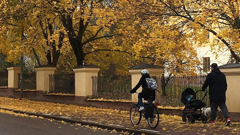 Löv på cykelbanan - farligare än man kan tro.