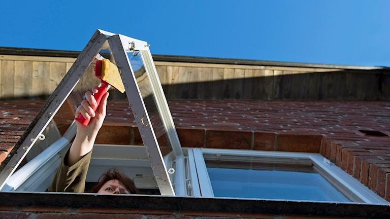 Fönsterputs är en Hushållsnära tjänst. Foto (arkivbild):Fredrik Sandberg/TT