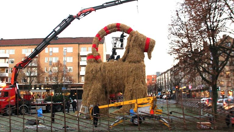 Nu är det bara finputs kvar på Gävlebocken. Foto: Christian Ploog/Sveriges Radio