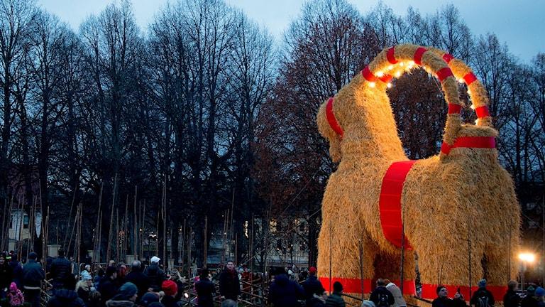 Den traditionella julbocken i Gävle invigdes 29 november. Foto: Mats Åstrand/TT.