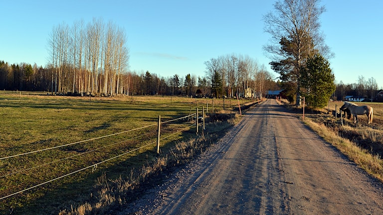 En ny trefilig väg skulle förändra Stackbo. Foto: Tomas Groop/ Sveriges Radio