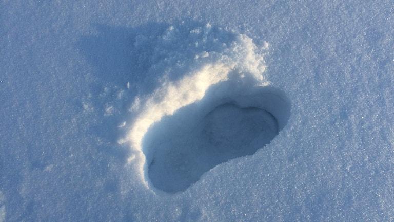 Spår i snön kan delas och följas av alla med ny teknik. Foto: Hasse Persson/Sveriges Radio