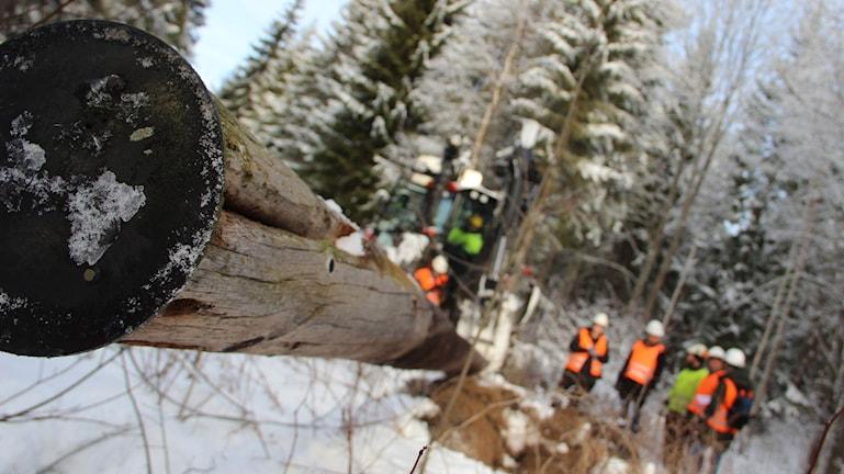 Elstolpe skogarbete Edstuga skogsmaskin