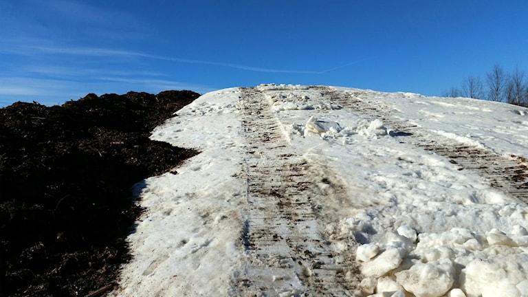 60-80 centimeter bark ska skydda snön från värme och vind. Men mycket lär ändå smälta.