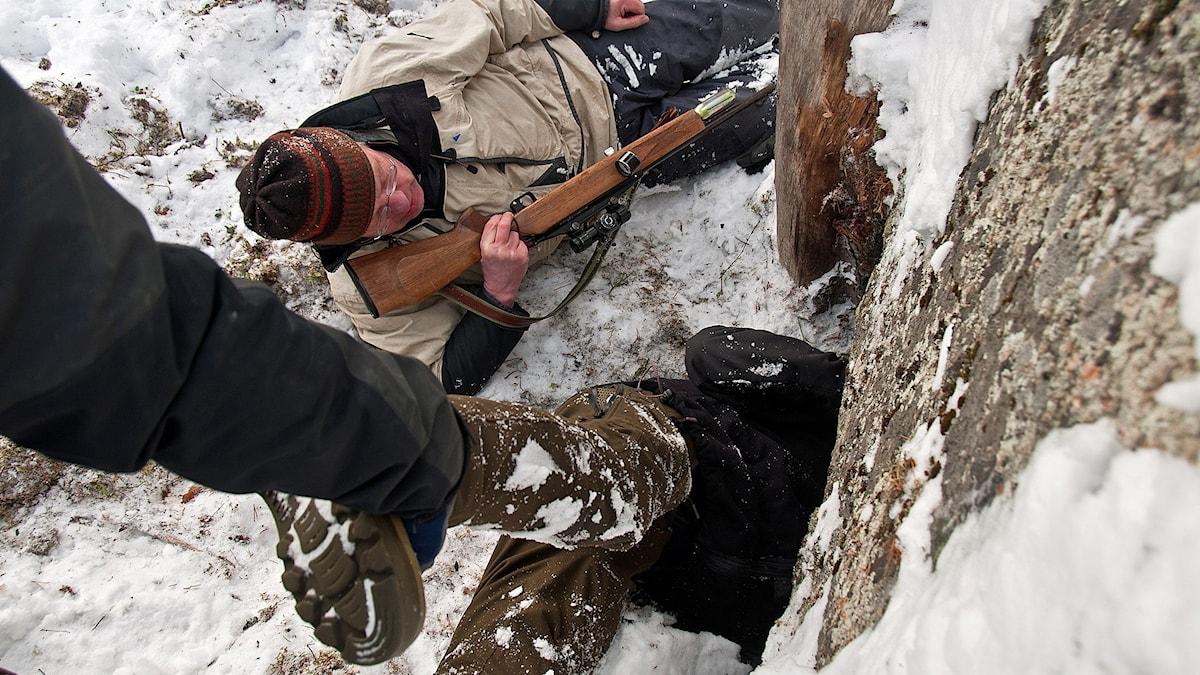 Tackåsen Skandinaviska björnprojektet björn