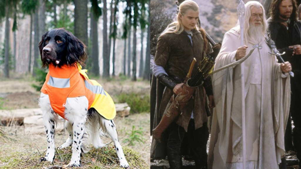 Skyddsvästarna som ska skydda hundarna mot varg- och vildsvinsattacker. har samma namn som alvkaraktärernas skyddsbrynjor i böckerna om Ringen.