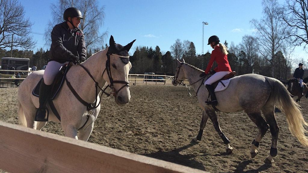 Gävle Horse Festival pågår i fyra dagar.