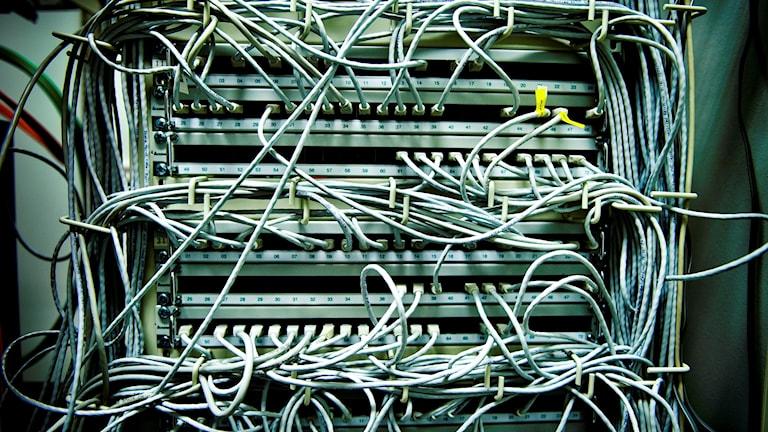 Nätverkssladdar. Foto: Magnus Hjalmarson Neideman / SvD / TT