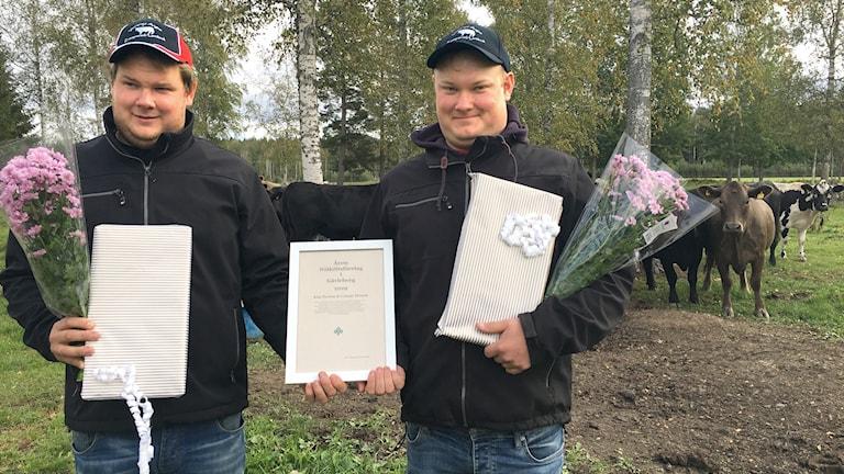 Klas och Gunnar Perssons lantbruk i Hedesunda är utsett till årets nötköttsföretag av LRF Gävleborg.