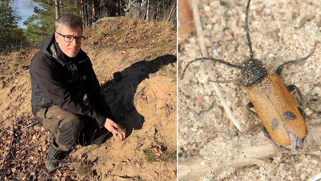 Naturvårdsbiologen Magnus Stenmark och en ovanlig insekt som heter bibagge