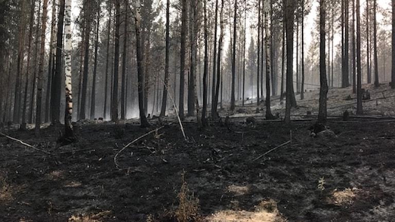 Skogsbrand Ljusdal.