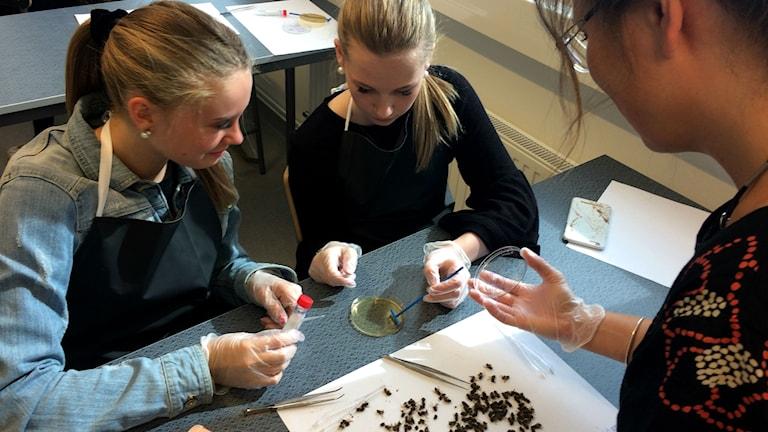Elever på Vallbacksskolan hjälper forskare vid Lunds Universitet.