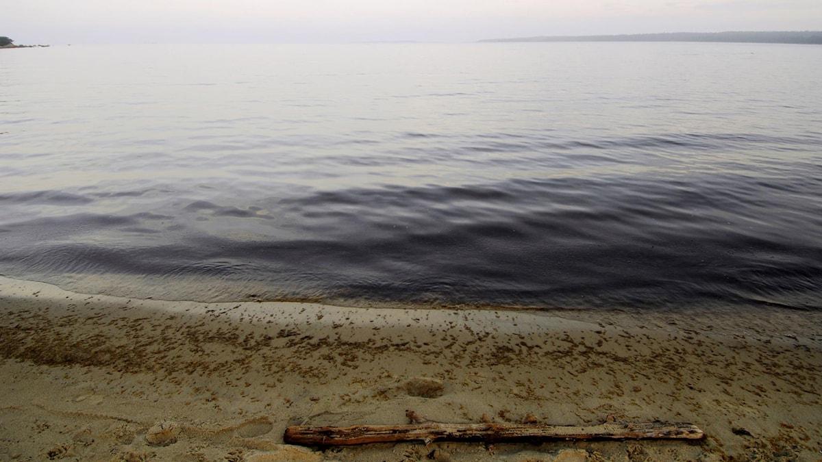 För att få tillstånd att sprida askan måste man vara minst 300 meter från närmaste strand.