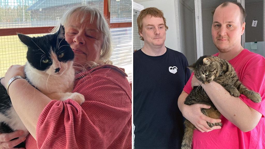 """Till vänster Irene Paulin vid Gästrike Katthem med """"hitte-katten"""" Kurre i famnen. Till höger Fredrik Kranz och Niklas Norlén vid GÄVLE katthem, kelande med katten Greta som sitter i karantän."""