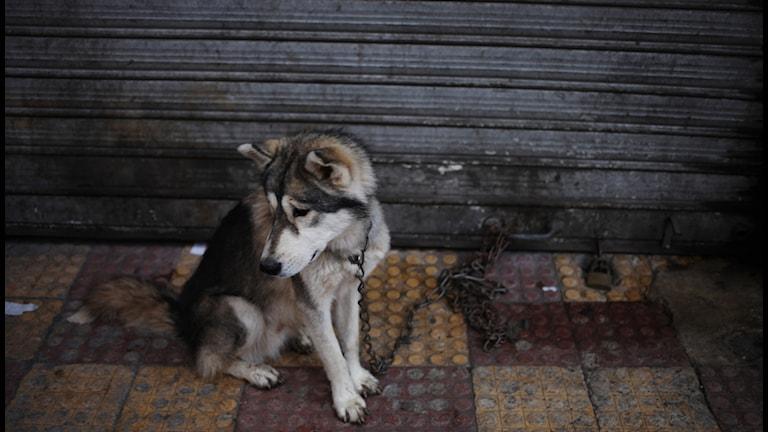Även djur kan vara offer när det förekommer våld i parrelationer. Foto: Mohammad Hannon / AP