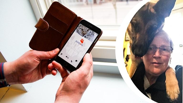 Bild på smartphone och appen Skandobs touch, och inlagd bild med Charlotte Olsson och schäfern Heidi.