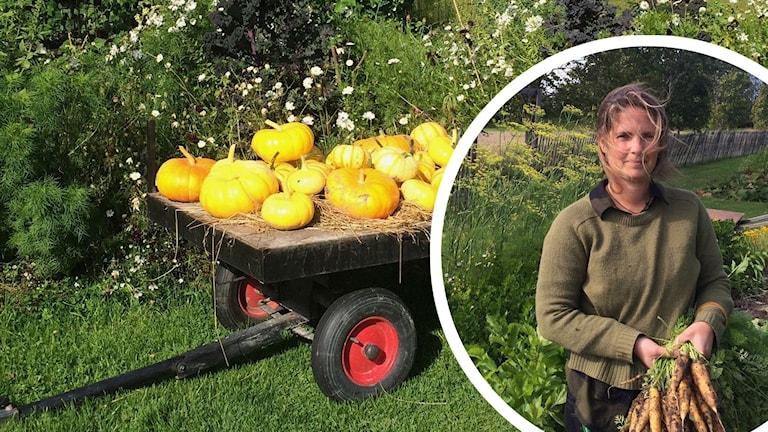 Frida Mörnerud är trädgårdsmästare och ger sina bästa tips för lagring av grönsakerna.