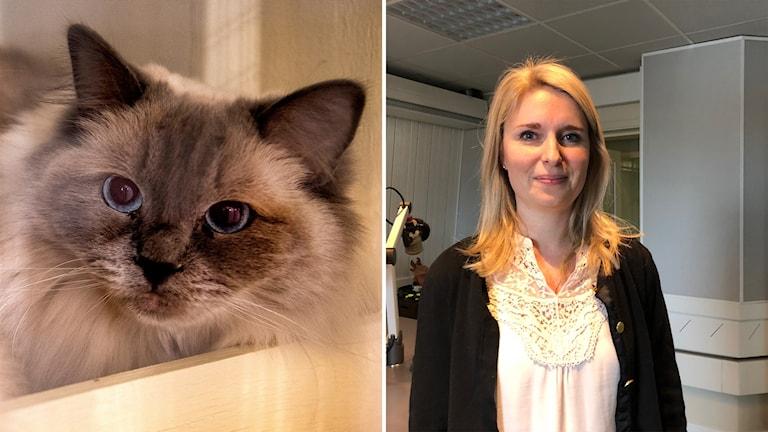 Katter, Länsveterinär Gävleborg