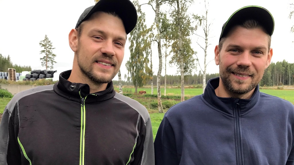 Tvillingbönderna Stefan och Tomas Åkerlund på Brorsans Lantbruk