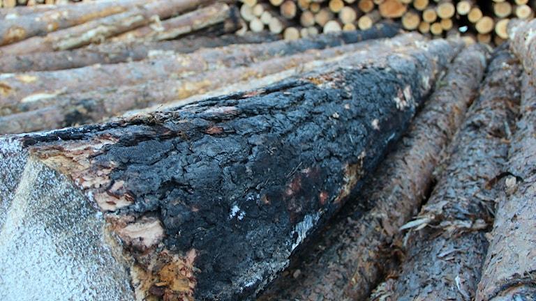 25000 av totalt 160 000 skogskubikmeter brandskadat timmer finns klart att såga på Setrasågen.