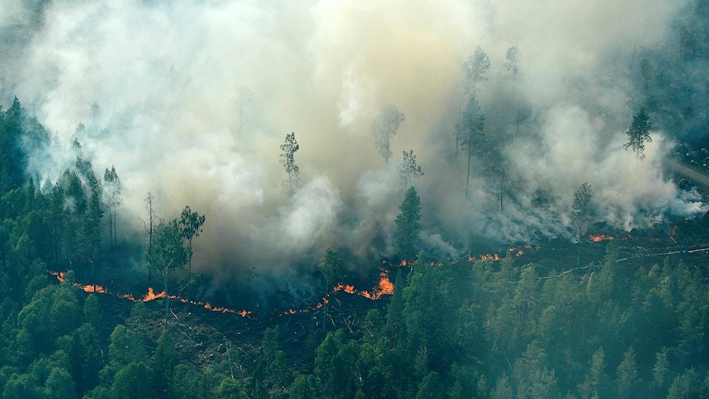 Flygbild över brandområdet.