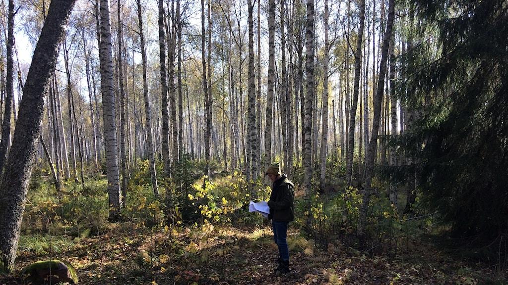 Skogskonsulent Brita Asplund står i en gles björkskog med en gran i kanten.