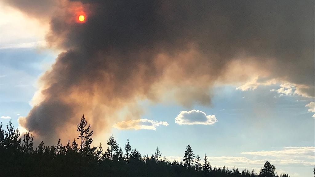 Stora rökmoln ovanför skog