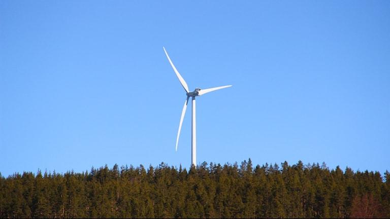 Ett vindkraftverk på toppen av en granbeklädd kulle.