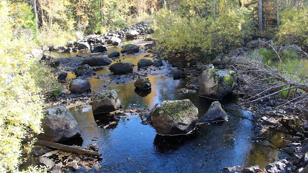 Skärjån som rinner ut i Axmar bruk plågas av låga vattenflöden och tidigare flottning som gjorde att ån delvis byggdes om.
