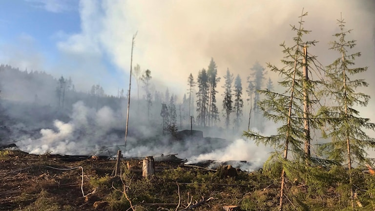 Skogsbrand i Bjuråker